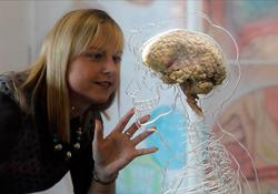 сколько процентов мозга использует человек